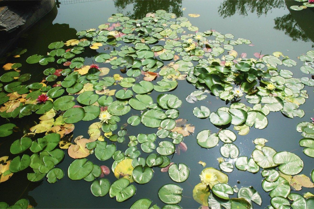 Detener la pérdida de biodiversidad local en entornos acuáticos